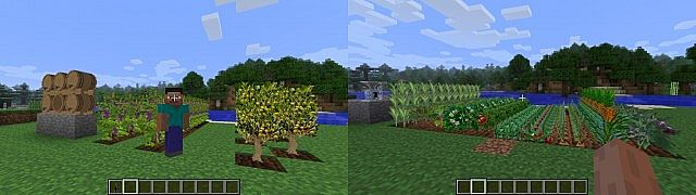 http://cdn.file-minecraft.com/Mods/Plants-and-Food-Mod-1.jpg
